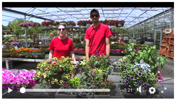 Video image for Hillermann Container Garden Recipes at Hillermann Nursery and Florist