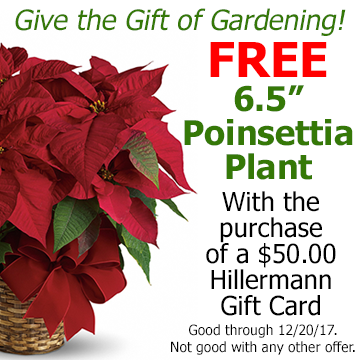 Give the gift of gardening with a Hillermann Gift Card. Receive a FREE 6.5 Poinsettia Plant with the purchase of a 50.00 Hillermann Gift Card. Good through 12-20-17. Not good with any other coupon, sale or discount.