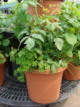 Vegetable container garden at Hillermann Nursery & Florist