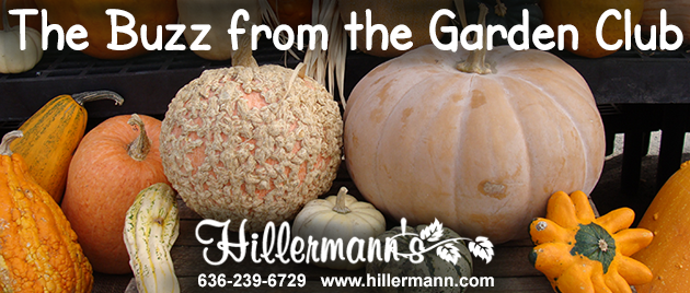 Pumpkins and gourds available at Hillermann Nursery and Florist