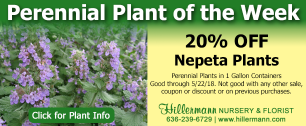 Perennial Plant of the Week - Nepeta. Click the image for plant information