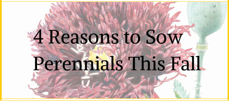 4 Reasons to Sow Perennial This Fall - Header graphic by Botanical Interests Seed Company