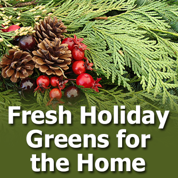 Fresh Holiday Greens for the Home