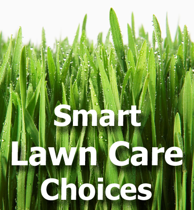 Lawn grass blades picture with text - Smart Lawn Care Choices