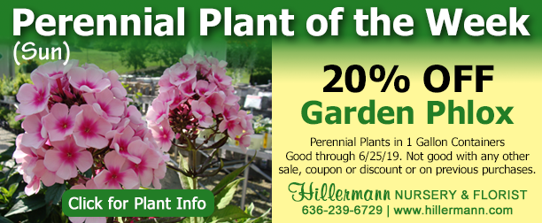 Perennial Plant of the Week at Hillermann Nursery and Florist