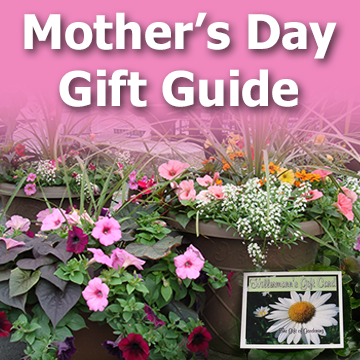 Mothers Day Gift Guide article title graphic with text and pretty annual flowers