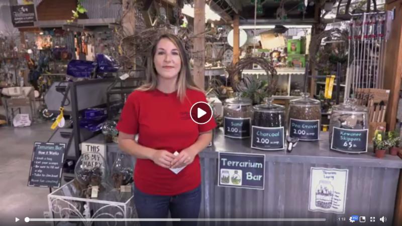 Terrarium Bar - Video Image from Hillermann Nursery and Florist