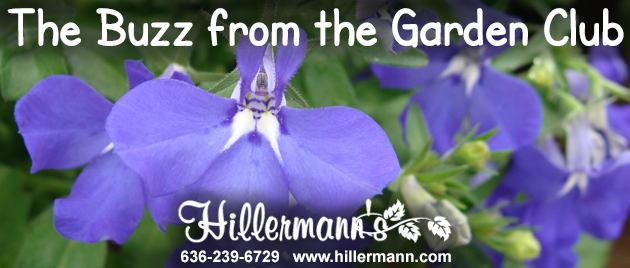 Newsletter header with pretty annual flowers with the Hillermann logo. www.hillermann.com