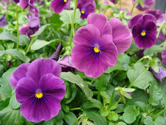 Plants available at Hillermann Nursery and Florist