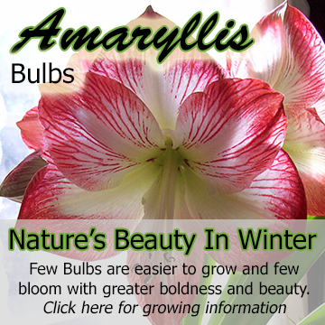 Title block - picture of a amaryllis bloom with text - Nature's Beauty In Winter