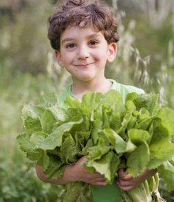 Boy holding fresh garden lettuce