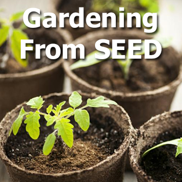 Seedling picture with title - Gardening from SEED. Click for the article