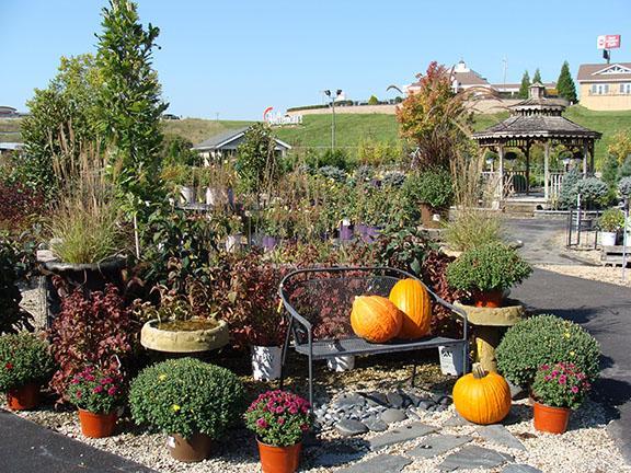 Nursery lot display at Hillermann Nursery and Florist - September 2019