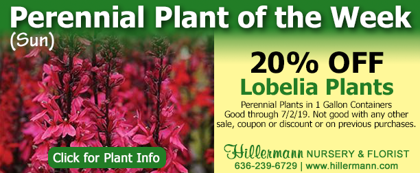 Hillermann Nursery and Florist - Perennial of the Week - Lobelia - Click for plant information