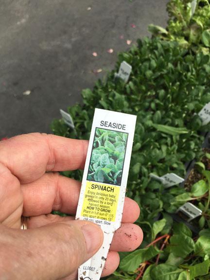 Vegetable starter plants available at Hillermann Nursery and Florist
