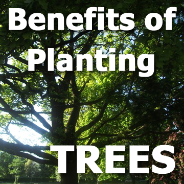 Picture of a tree and text graphic - Benefits of Planting TREES