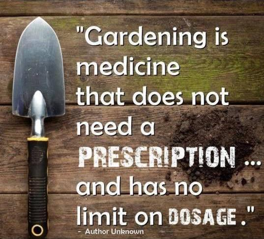 Picture with text - Gardening is medicine that does not need a PRESCRIPTION... and has no limit on DOSAGE. Author unknown