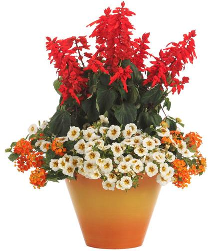 Container Garden design from ProvenWinners.com