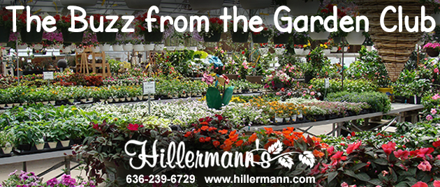Annual flowering plants and hanging baskets in the greenhouse at Hillermann Nursery and Florist