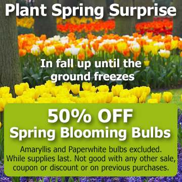 Plant spring surprise in fall up until the ground freezes - Spring Blooming Bulb Special