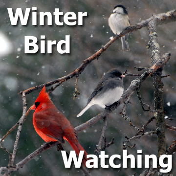 Birds on tree branches in winter with snow falling