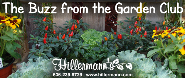 Email heading picture with fall annual plants and text - The Buzz from the Garden Club - and the Hillermann logo