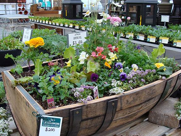 Large barrel contianer garden with a mix of cool season flowers, vegetables and herbs in the greenhouse at Hillermann Nursery and Florist