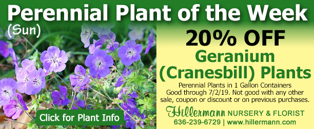 Hillermann Nursery and Florist - Perennial of the Week - Hardy Geranium - Click for plant information