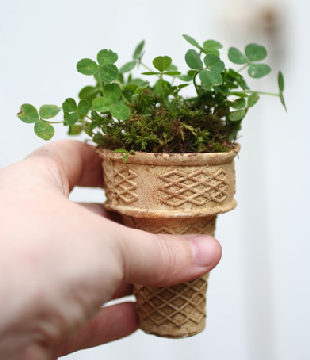 Picture of an ice cream cone that has been planted