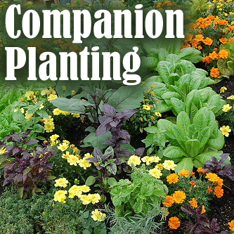 Garden picture with text - Companion Planting