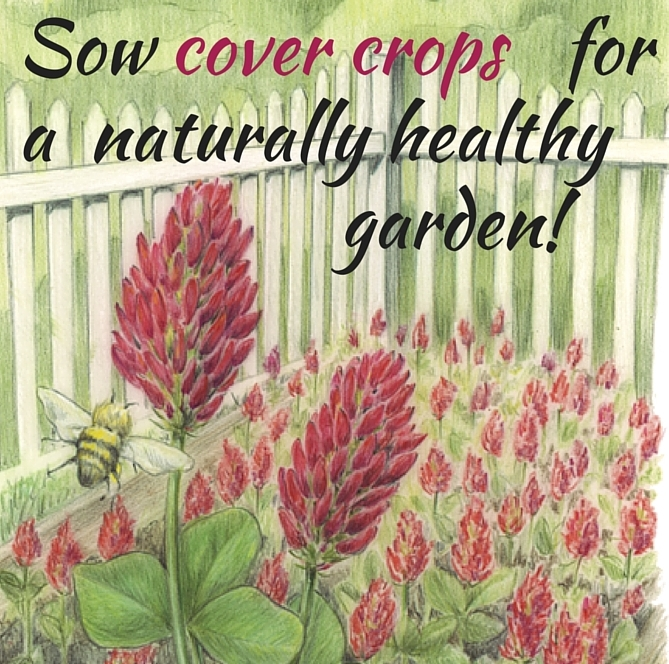 Picture of garden with blooming cover crops and text - Sow cover crops for a naturally healthy garden!