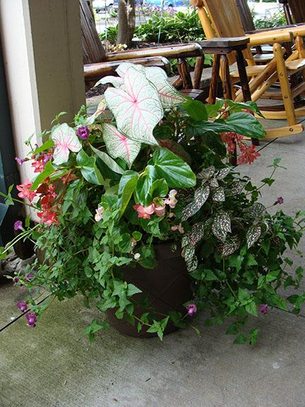 Shade container garden at Hillermann Nursery and Florist