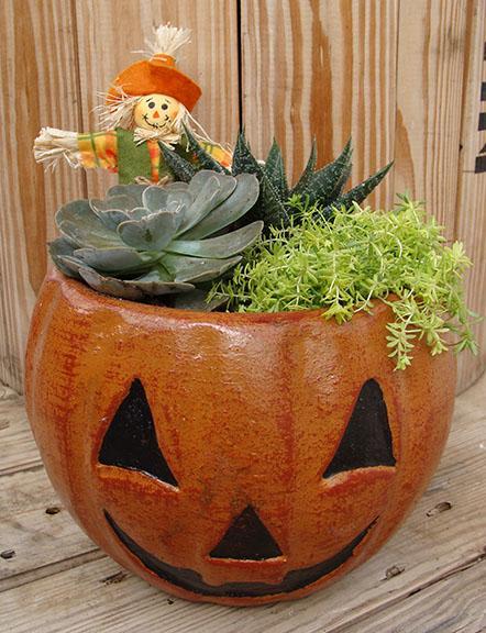 Succulent Pumpkin Planter for a Make-N-Take at Hillermann Nursery & Florist
