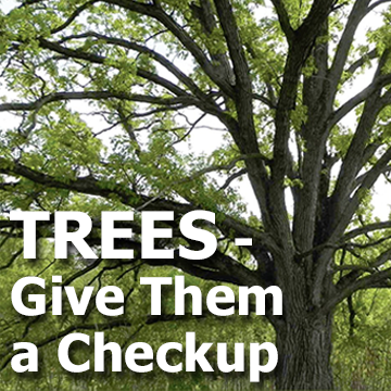 Tree picture with text - Trees - Give Them a Checkup