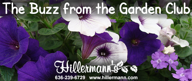 Hillermann email heading graphic - annual petunia and verbena flowers with the Hillermann logo and text