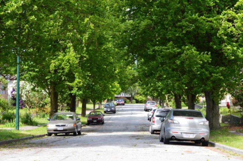 Neighborhood street lined with mature trees. Credit - University of British Columbia