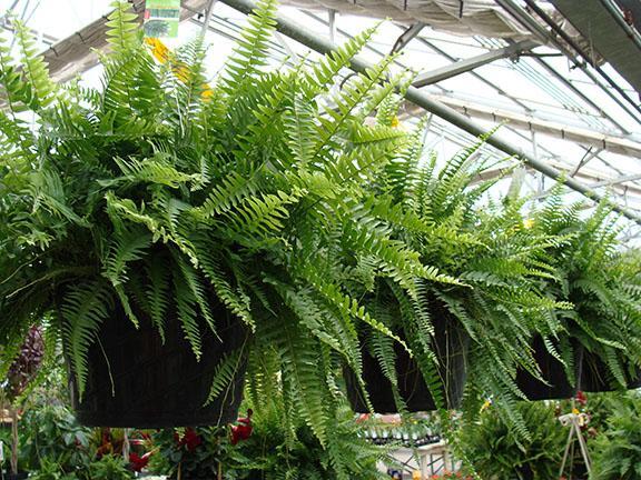 Plants availalbe at Hillermann Nursery & Florist