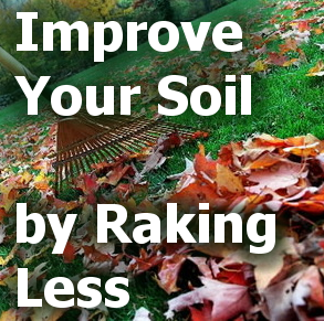 Improve Your Soil by Raking Less - title block with picture