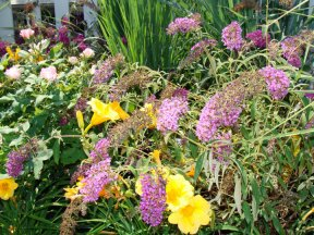 Blooming Perennial Plants