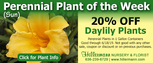 Perennial of the week picture and text. Click the image for plant information