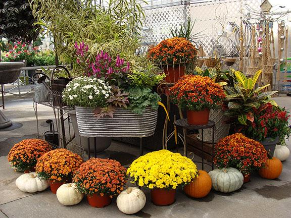 A pretty display of fall pumpkins and plants at Hillermann Nursery and Florist