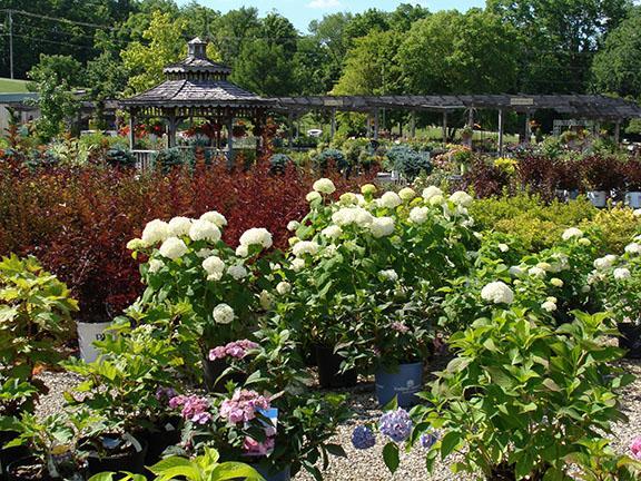 Nursery plants available at Hillermann Nursery and Florist
