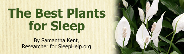 The Best Plants for Sleep article title banner with a peace lily plant picture