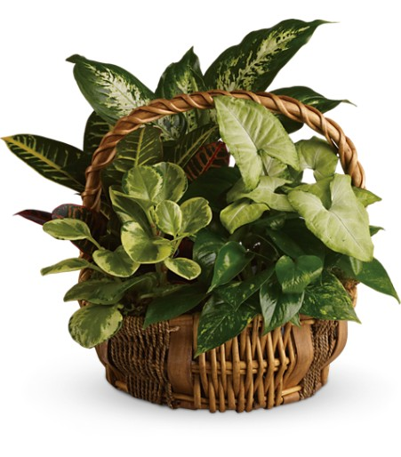Plant combination basket by TeleFlora