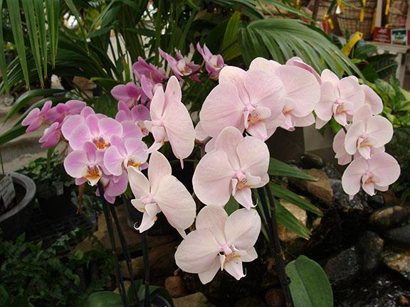 Orchid blooms in a display at Hillermann Nursery and Florist