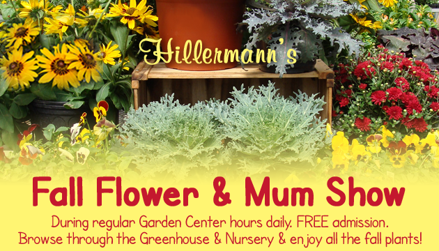 Fall flowers, mums and more available at Hillermann Nursery and Florist - Fall Flower and Mum Show - open daily during garden center hours - FREE admission - browse through our greenhouse and nursery as long as you like!