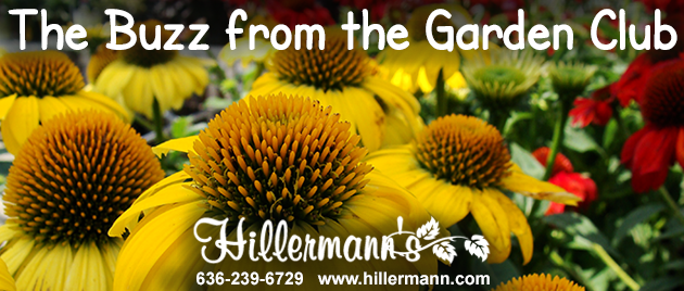 Hillermann Nursery and Florist heading picture with text and company logo