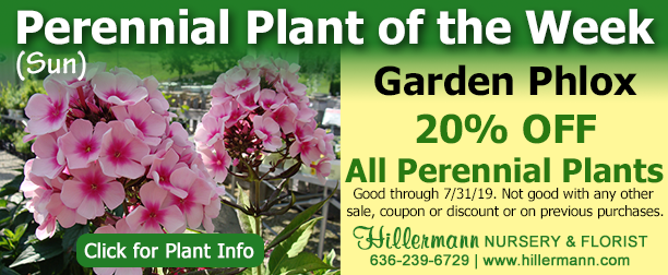 Perennial of the Week - Garden Phlox - Click the image for plant information
