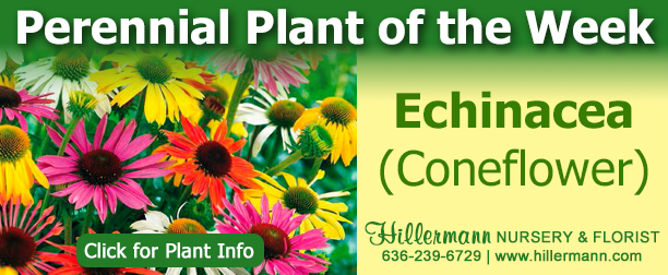 Perennial Plant of the Week - Echinacea (Coneflower) - Click for plant information