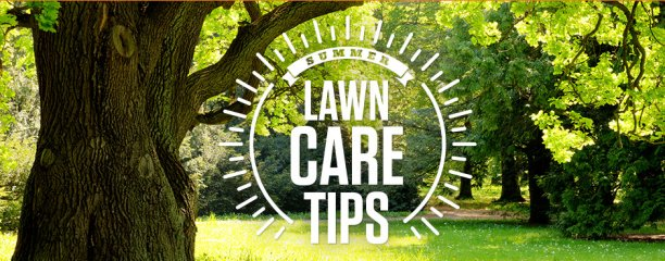 STIHL Summer Lawn Care Tips heading picture